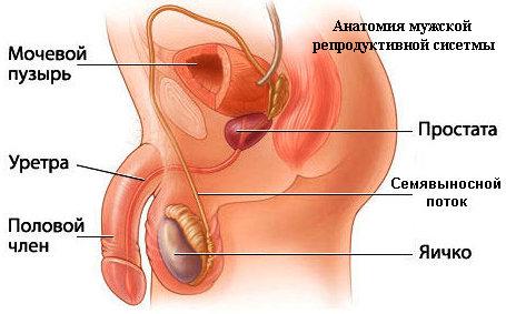 Хронический простатит - лечение и симптомы у мужчин, эффективные народные средства и лекарства